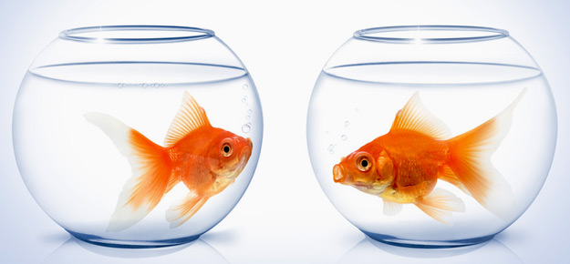 Goldfische haltung im glas und einzelhaltung sind tabu for Aquarium goldfische