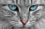 Warum Erschrecken Sich Katzen Vor Gurken