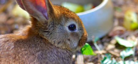 was fressen kaninchen am liebsten