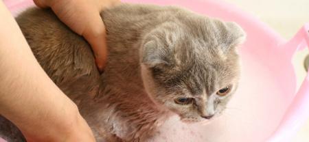 546897bdd55e8e Sollte man Katzen baden oder waschen